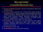 myoepiteli ln a myofibroblastick l ze
