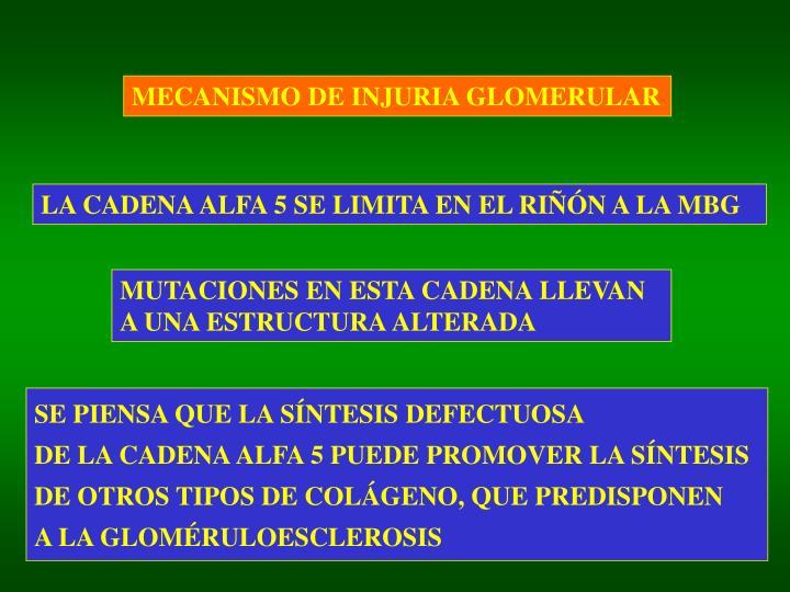 MECANISMO DE INJURIA GLOMERULAR