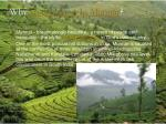 why honeymoon in munnar