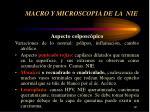 macro y microscopia de la nie