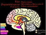 v as dopamin rgicas principales
