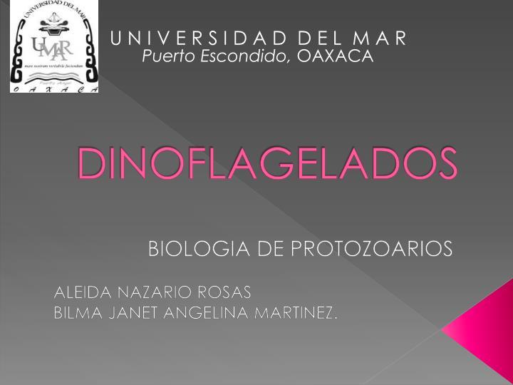 dinoflagelados n.