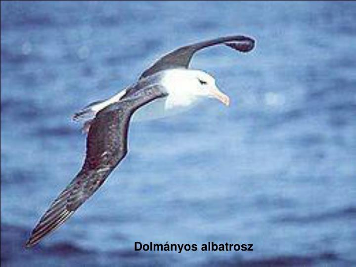 Dolmányos albatrosz