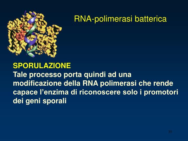 RNA-polimerasi batterica
