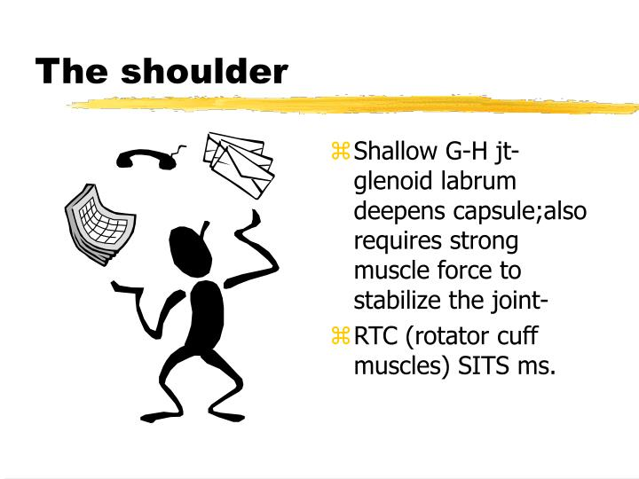 the shoulder n.