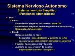 sistema nervioso autonomo sistema nervioso simp tico funciones adrenergicas1