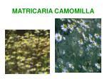 matricaria camomilla