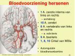 bloedvoorziening hersenen