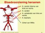 bloedvoorziening hersenen1