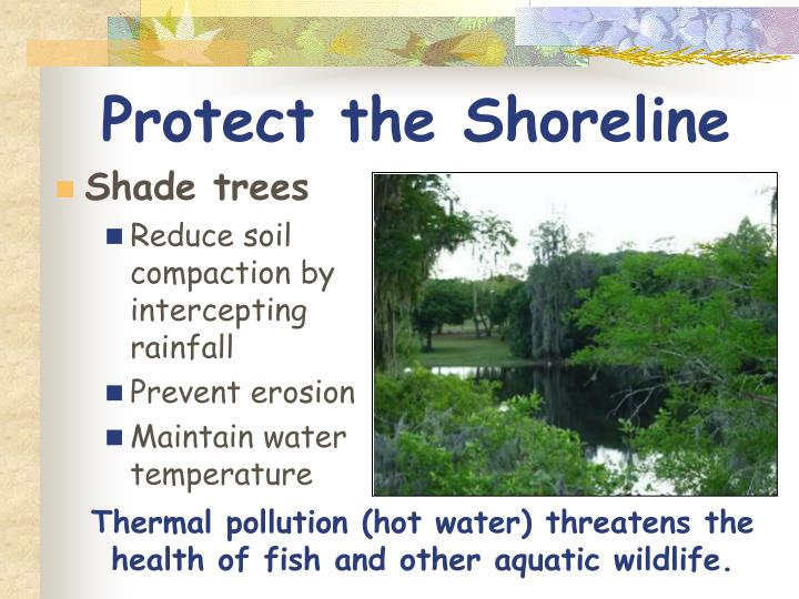 Protect the Shoreline