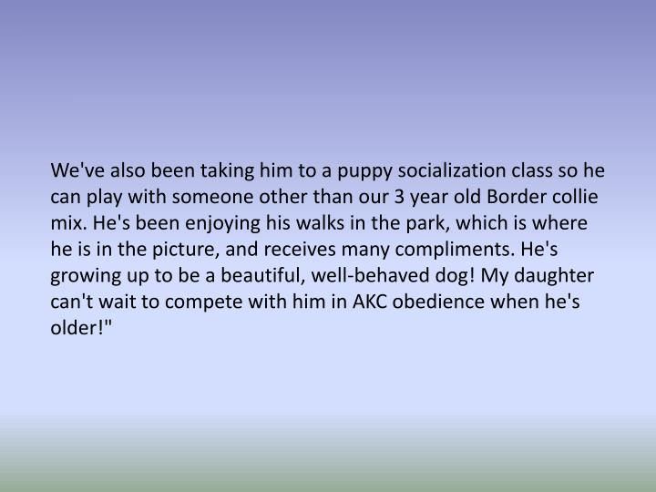 """We've also been taking him to a puppy socialization class so he can play with someone other than our 3 year old Border collie mix. He's been enjoying his walks in the park, which is where he is in the picture, and receives many compliments. He's growing up to be a beautiful, well-behaved dog! My daughter can't wait to compete with him in AKC obedience when he's older!"""""""