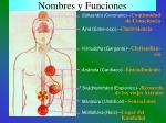 nombres y funciones