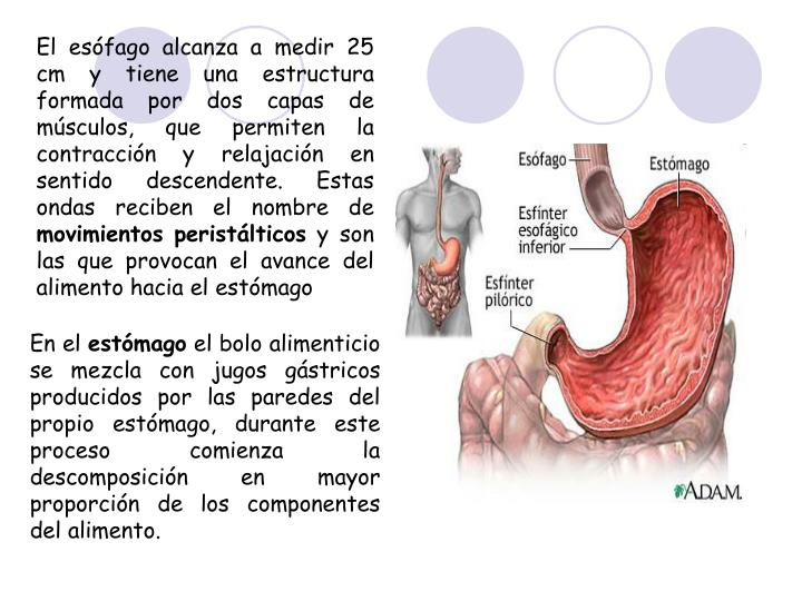 PPT - Aparatos PowerPoint Presentation - ID:1342088
