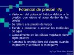 potencial de presi n p