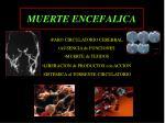 muerte encefalica