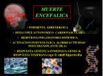 muerte encefalica3