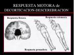 respuesta motora de decorticacion descerebracion