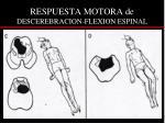 respuesta motora de descerebracion flexion espinal