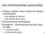 les chromosomes eucaryotes