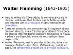 walter flemming 1843 19051