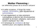 walter flemming les diff rentes phases de la division cellulaire