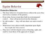 equine behavior2