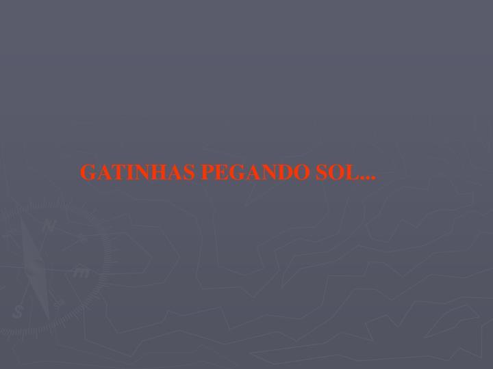 GATINHAS PEGANDO SOL...