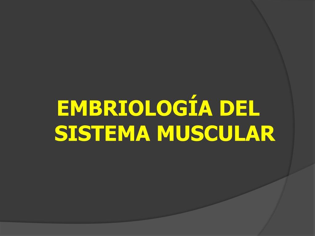 PPT - EMBRIOLOGÍA DEL SISTEMA MUSCULAR PowerPoint Presentation - ID ...