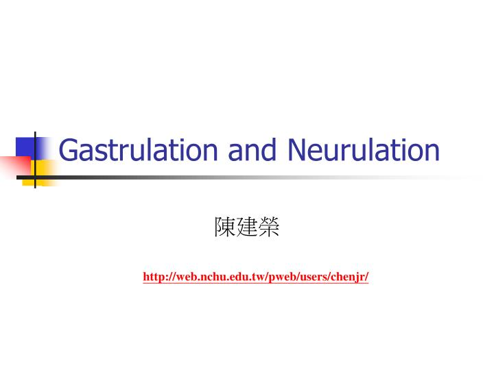 gastrulation and neurulation n.