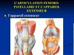 l articulation femoro patellaire et l appareil extenseur