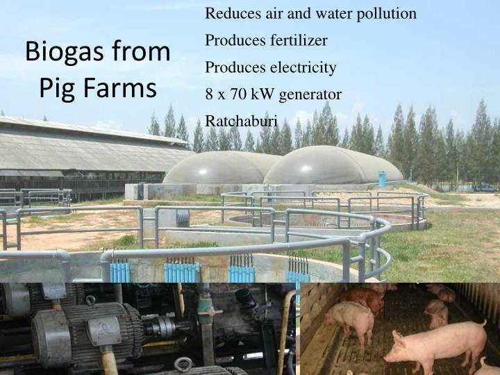 Biogas from Pig Farms