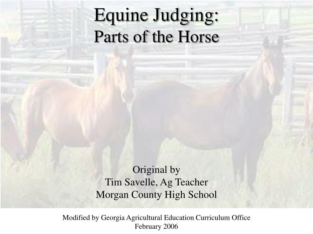 equine judging parts of the horse l.