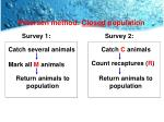 petersen method closed population