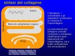 sintesi del collagene
