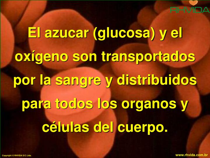El azucar (glucosa) y el oxígeno son transportados por la sangre y distribuidos para todos los organos y células del cuerpo.