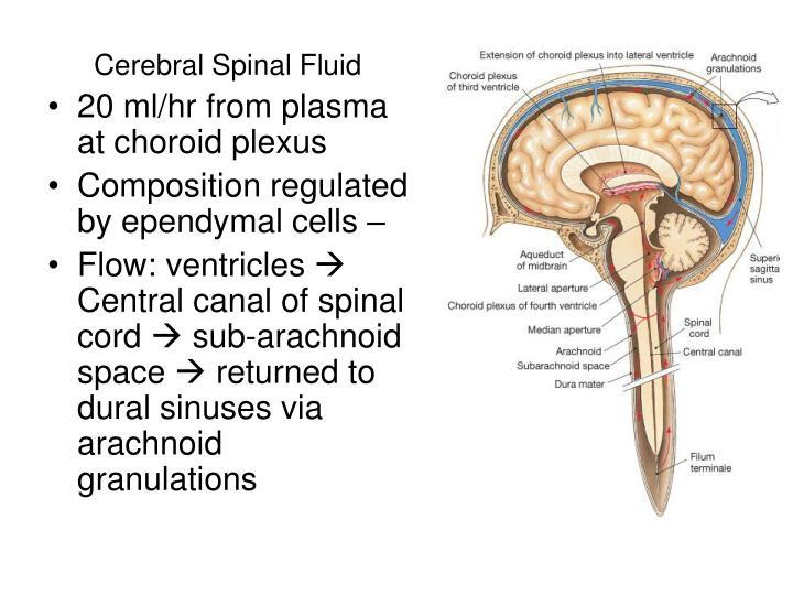 Cerebral Spinal Fluid