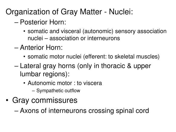 Organization of Gray Matter - Nuclei: