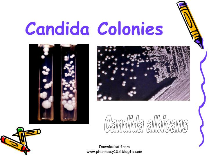 Candida Colonies