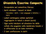 ghiandole esocrine composte