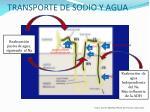 transporte de sodio y agua