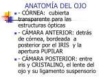 anatom a del ojo1