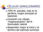 c lulas ganglionares1