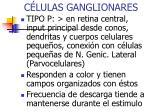 c lulas ganglionares2