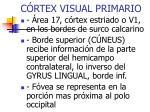 c rtex visual primario