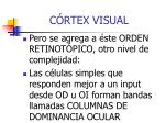 c rtex visual2