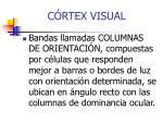 c rtex visual3