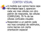 cortex visual