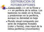 distribuci n de fotoreceptores
