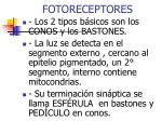 fotoreceptores1