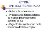 retina epitelio pigmentado1